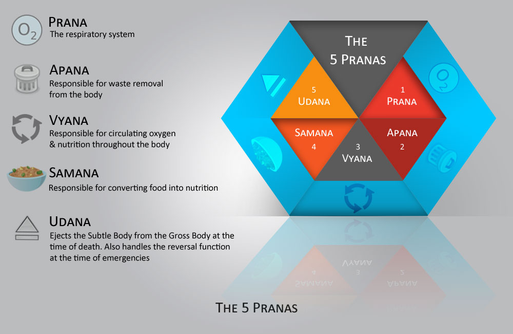 The 5 Pranas
