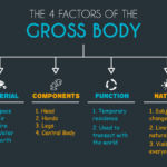 The 4 Factors of the Gross Body