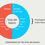 Components of the Vital Air Sheath