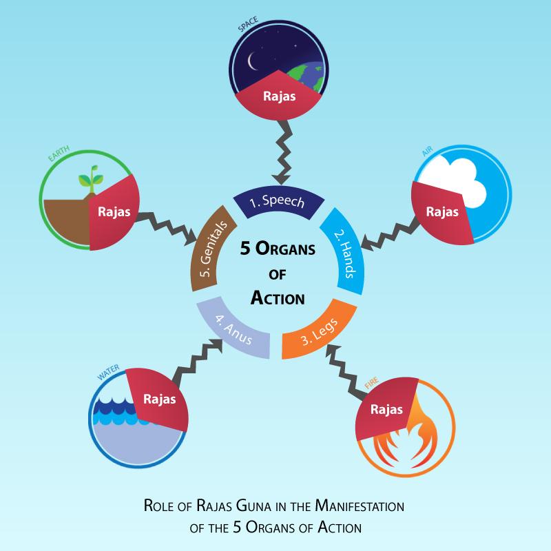 Rajas Organs of Action